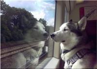 pies_w_pociagu_o2Q_1